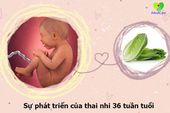 su-phat-trien-cua-thai-nhi-36-tuan-tuoi