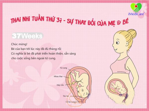 su-phat-trien-cua-thai-nhi-tuan-thu-37